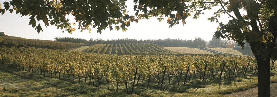 Weingut Stadler Weinberge_quer